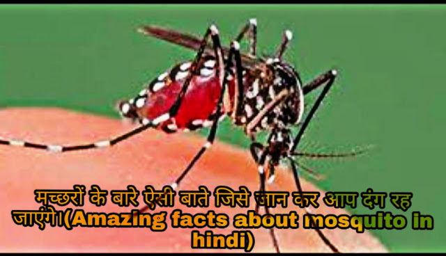 amazing facts about mosquito in hindi