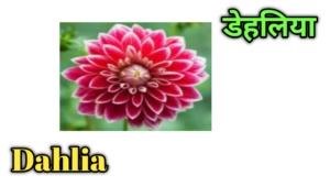 flowers name in Hindi
