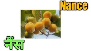 फलों के नाम